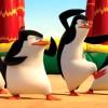 喜劇動畫《馬達加斯加爆走企鵝》11月26日上映